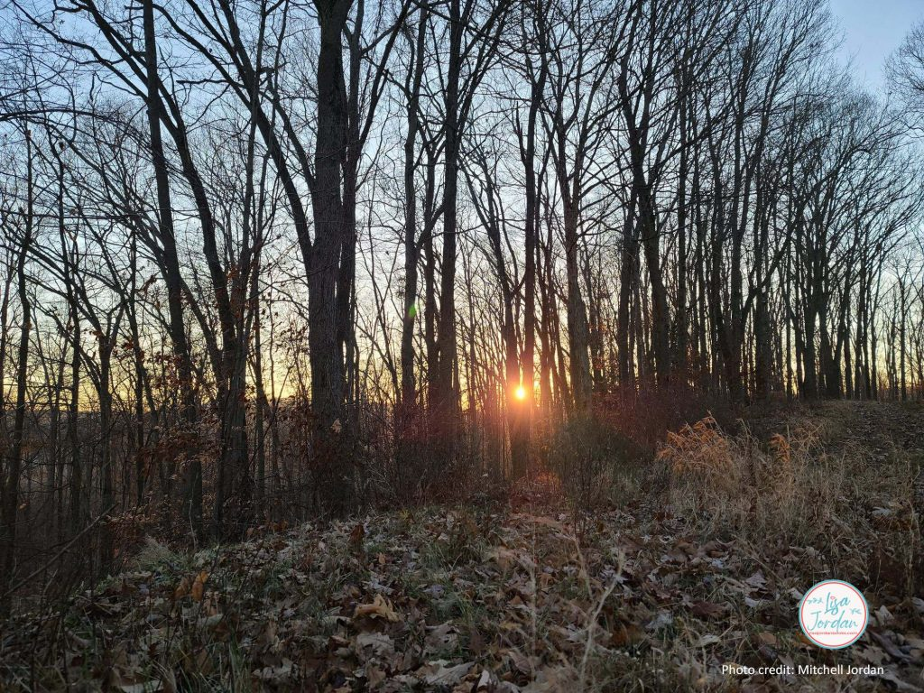 sunlight through bare trees